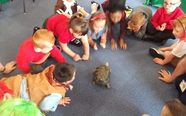 Timmy the Tortoise visits Reception