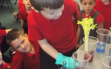 Year 3 – Science