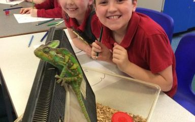 Year 3 visit from Grumpy the Chameleon