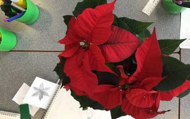 Poinsettia Sketching in Year 5